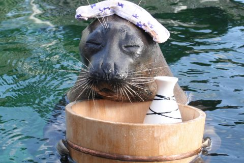 箱根園水族館の名物キャラクター温泉アザラシ