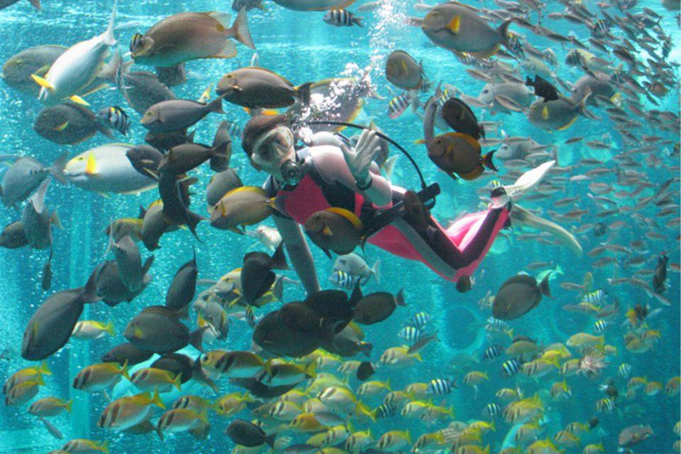 箱根園水族館の癒しの海中ショー