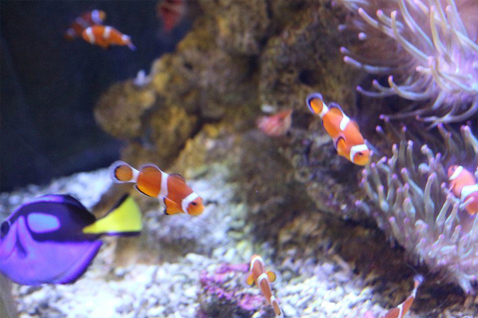 箱根園水族館の熱帯魚