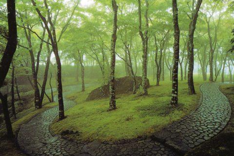 箱根美術館の庭園