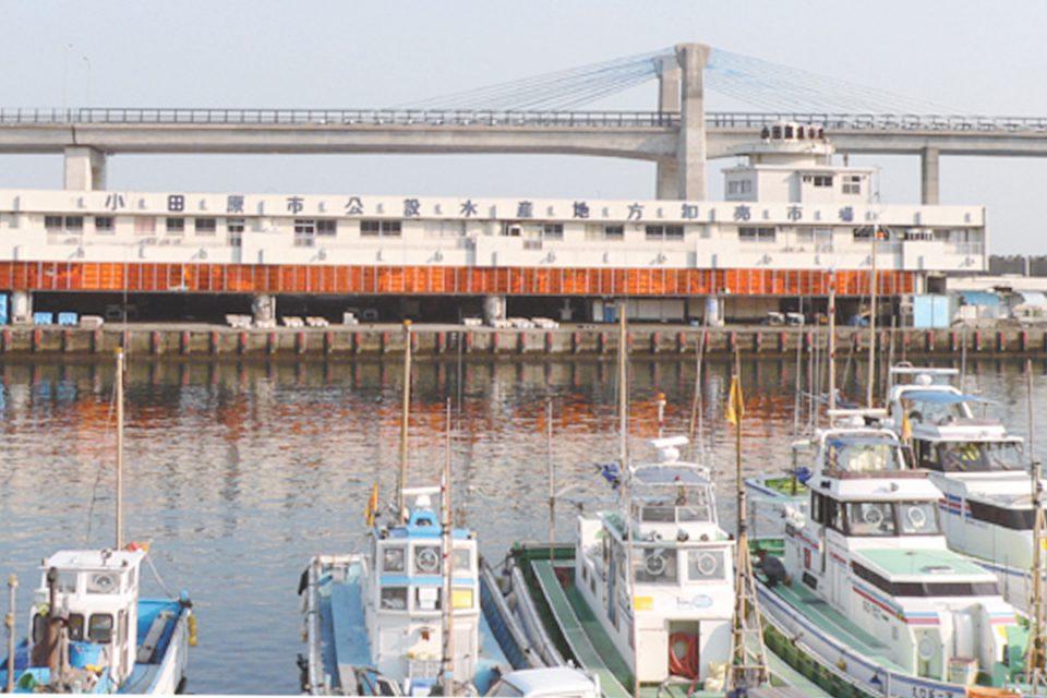 小田原漁港イメージ