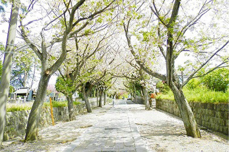 花をたずねて鎌倉歩きの様子1