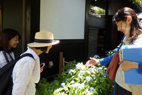 花をたずねて鎌倉歩きの様子3