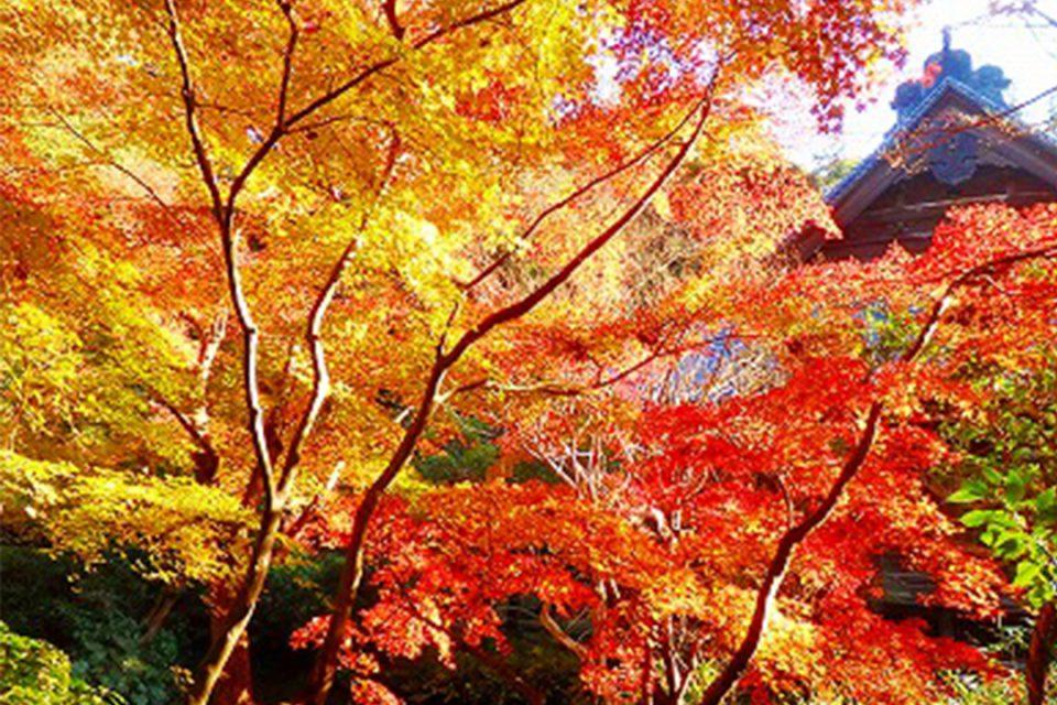 花をたずねて鎌倉歩きの様子5