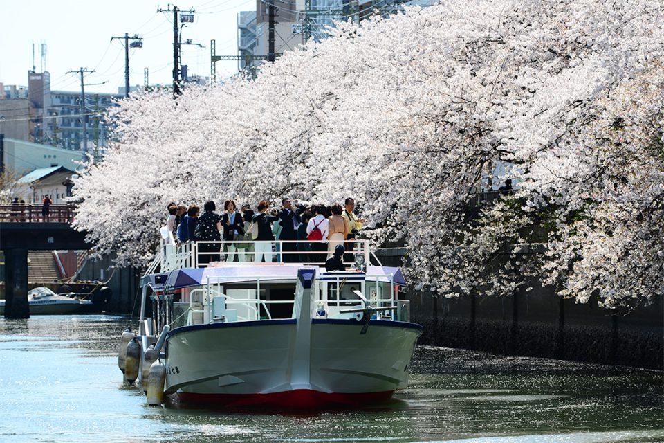 屋形船濱進と桜