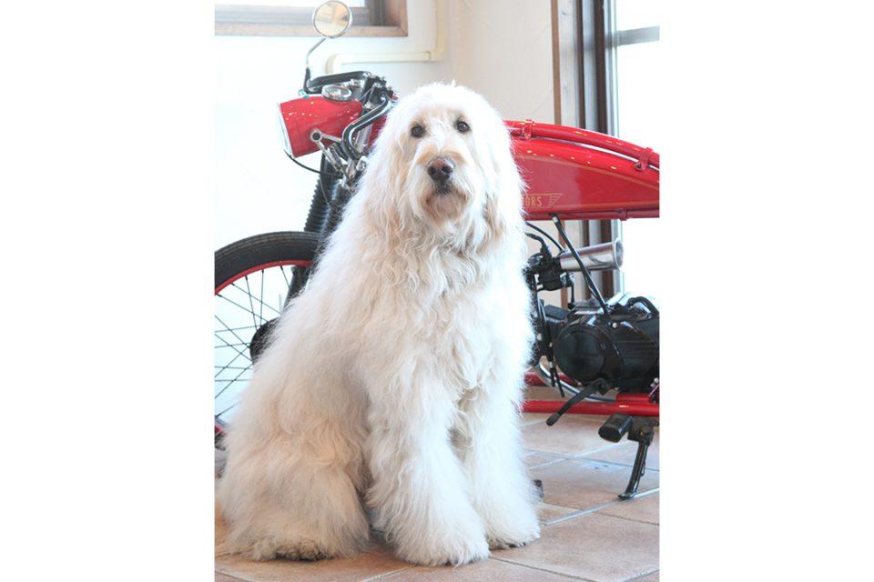 ブリキのおもちゃ博物館マスコット犬のロビー君