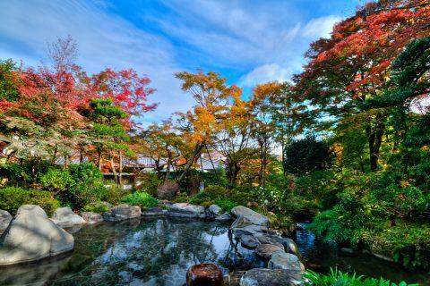 吉池旅館の紅葉時期の庭園