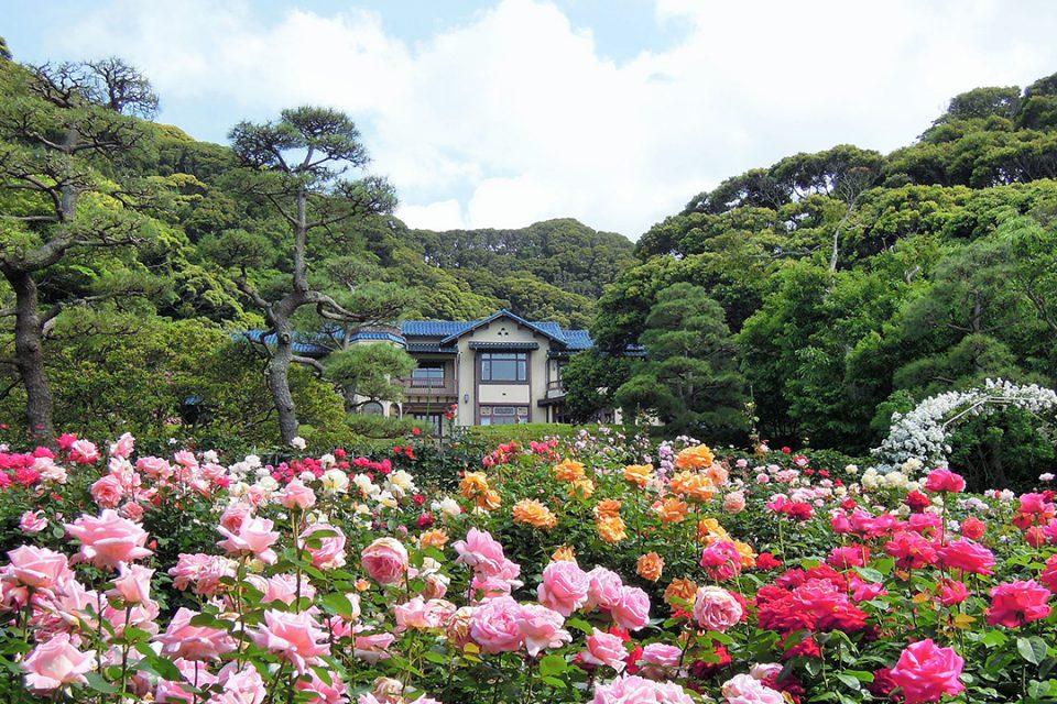 鎌倉文学館のバラ園