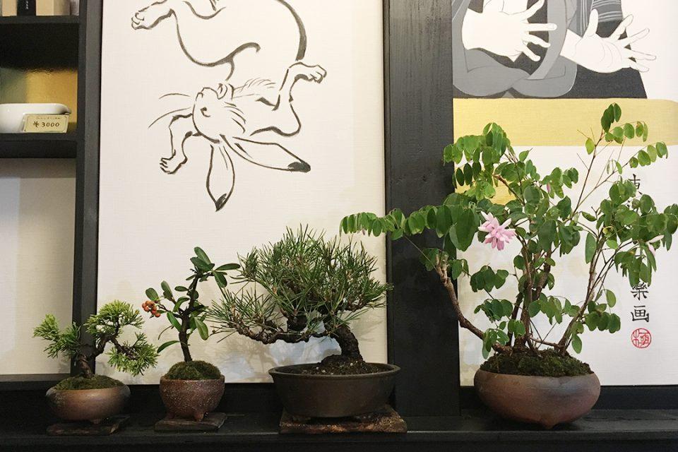 茶凛の店内にある盆栽