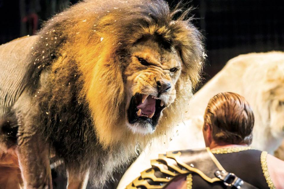 木下大サーカスのライオン