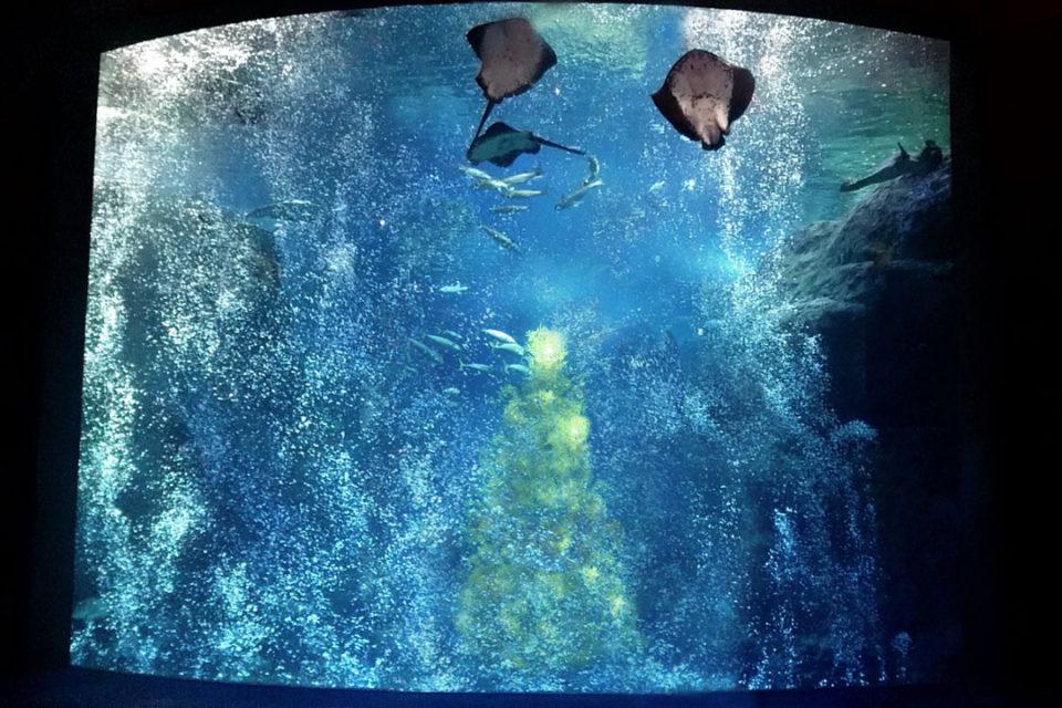 Jeweriumの泡と大水槽