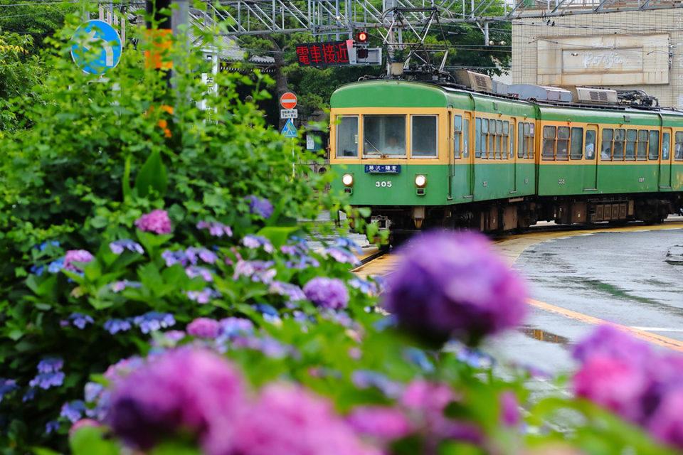 江ノ電沿線の紫陽花写真展(撮影:市川紀元)