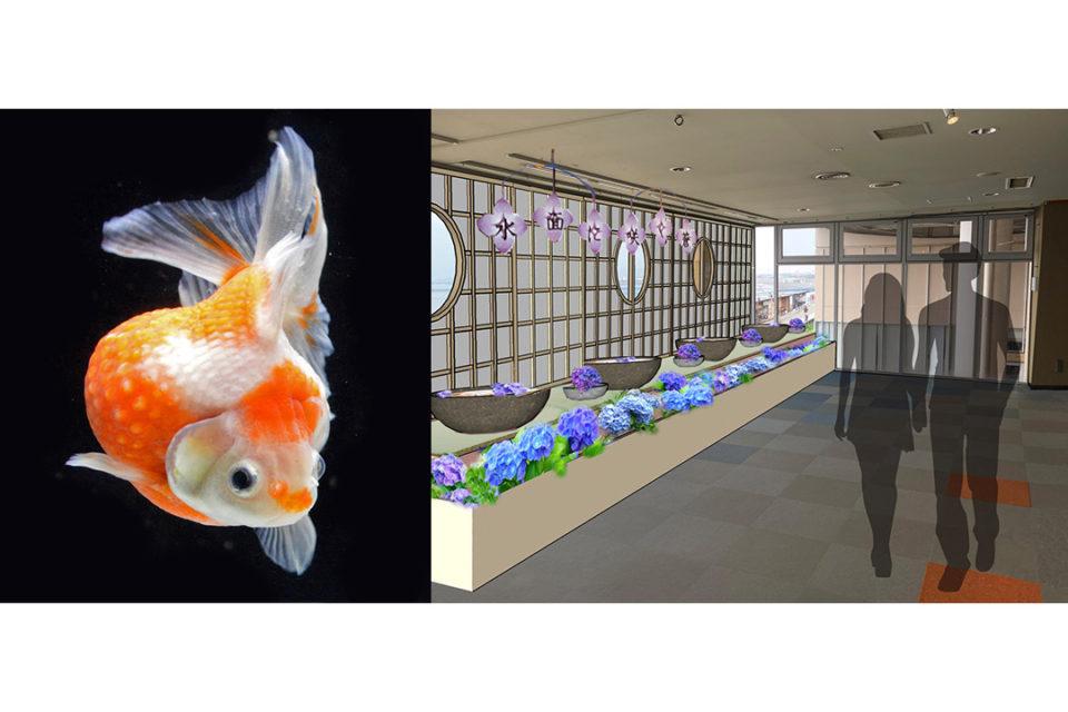紫陽花と金魚の特別展示