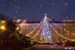 星の王子さまミュージアムのクリスマスツリー